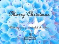 2016クリスマスa.jpg