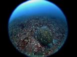 アオウミガメ180524b_R.jpg
