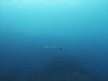 クロヘリメジロザメ190125_R.jpg