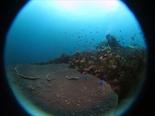 サンゴ160820_R.jpg