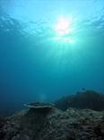 サンゴ1701913_R.jpg